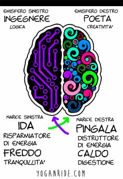 corrispondenza-di-ida-e-pingala-con-gli-emisferi-del-cervello